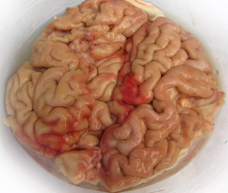 Creier pane